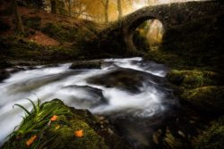 Autumn at Foleys Bridge, Tollymore Forest Park