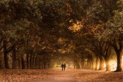Autumn in St Annes Park Clontarf Raheny Dublin